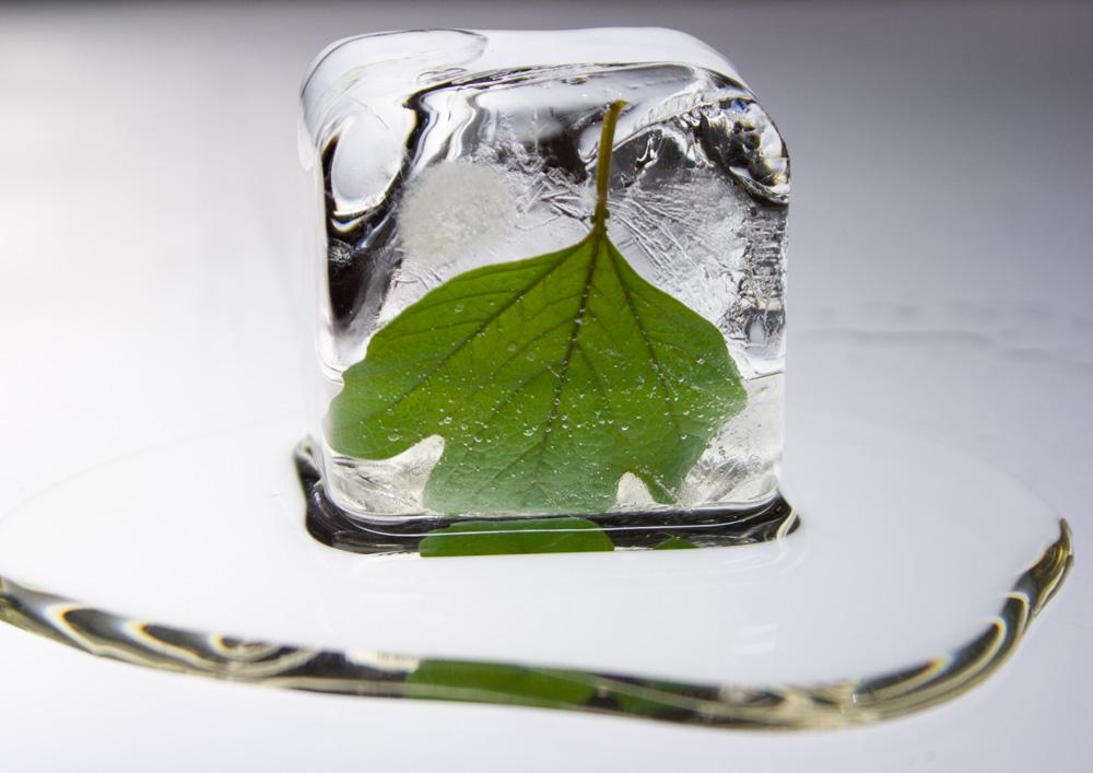 green-leaf1