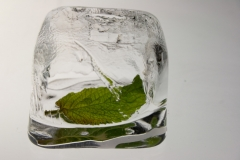 green-leaf21