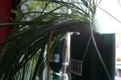 WIP | herbs