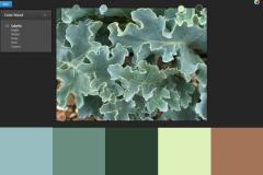 17.sea lettuce