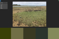 colour swatch - greens