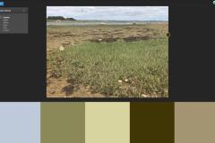 colour swatch - magnolia