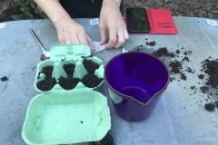 planting mustard seeds
